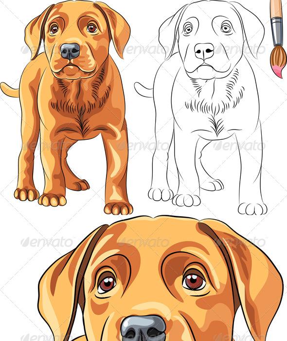 GraphicRiver Vector Coloring Book of Labrador Puppy 4130256