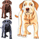 Vector Set of Labrador Retriever Puppies - GraphicRiver Item for Sale