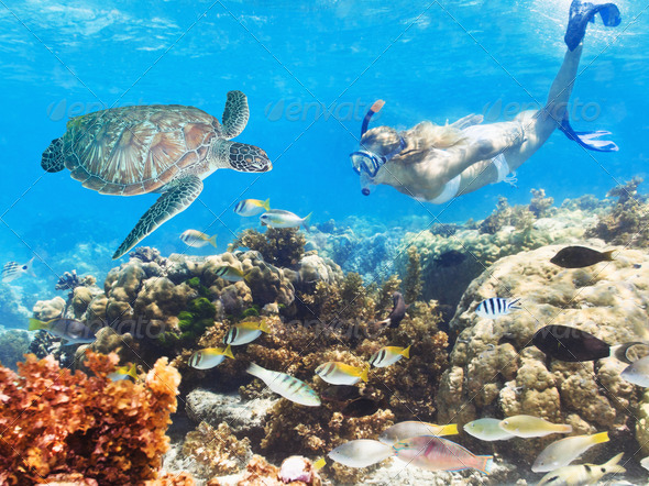 Diver and turtle - Stock Photo - Images