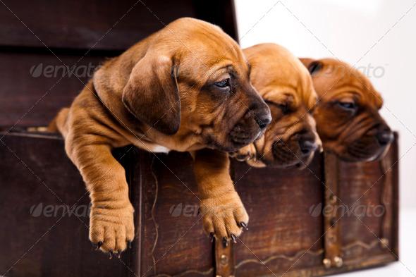 PhotoDune Puppy 4165888