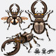 Stag Beetle Insect - GraphicRiver Item for Sale