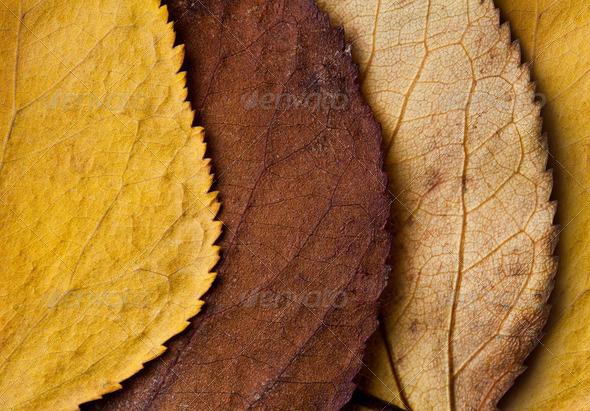 PhotoDune Closeup of beautiful fall foliage 4154179