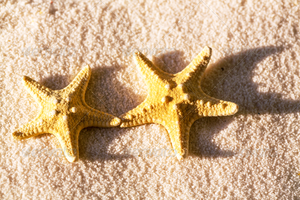 Starfish - Stock Photo - Images