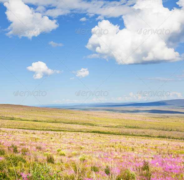 Tundra on Alaska - Stock Photo - Images