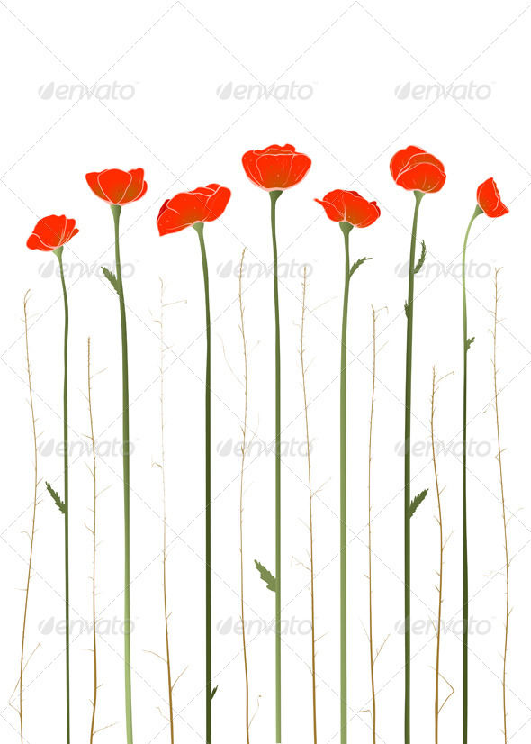 GraphicRiver Red Poppies Illustration 4158238