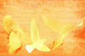 Doves Abstract - PhotoDune Item for Sale
