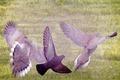 Wings - PhotoDune Item for Sale