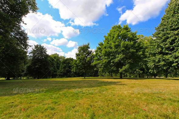Park meadow - Stock Photo - Images