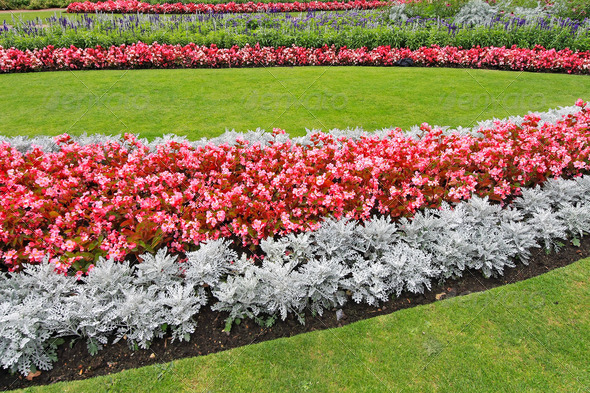 Flower park - Stock Photo - Images