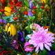 Autumn Harvest  - PhotoDune Item for Sale