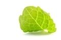 Mint Leaf - PhotoDune Item for Sale