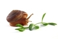 Snail with Green Plant - PhotoDune Item for Sale