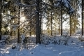 Landscape with winter sunny forest. - PhotoDune Item for Sale