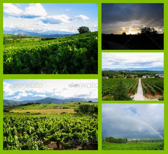 PhotoDune vineyards collage 4203615