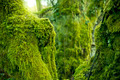 Trees Covered In Green Moss - PhotoDune Item for Sale