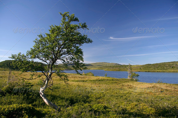 PhotoDune Lonely tree by the lake 4213548