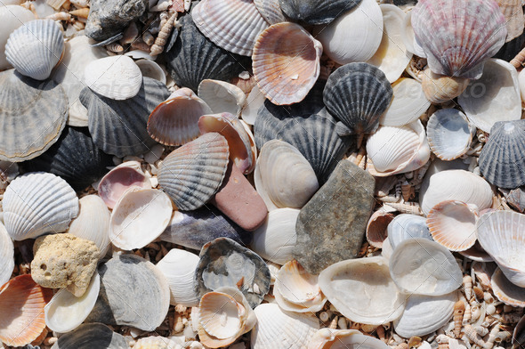PhotoDune shell 4213844