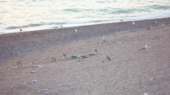 Gulls On Beach 1