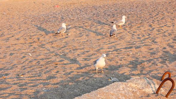 Gulls On Beach 5