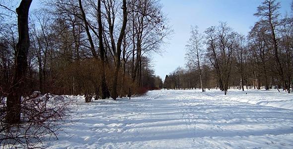 Walk In The Winter Wood