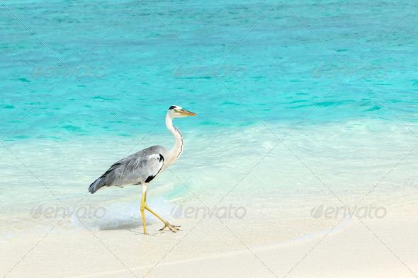 PhotoDune Heron at the beach 4229655