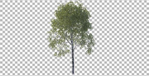 3DOcean Tree 4233366