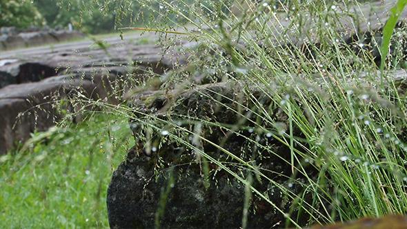 Herbage Water Drops