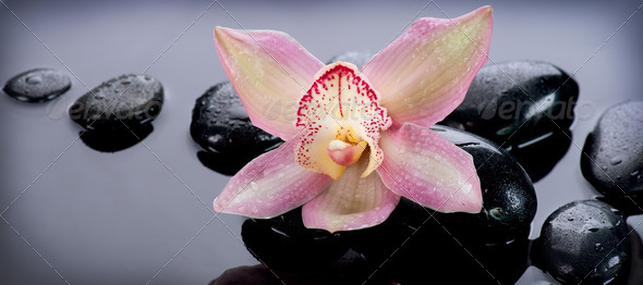 Spa Stones and Orchid Flower over Dark Background - Stock Photo - Images
