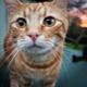 ashcat