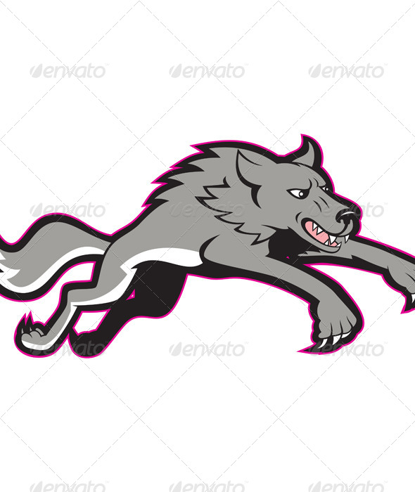 Gray Wolf Jumping Attacking