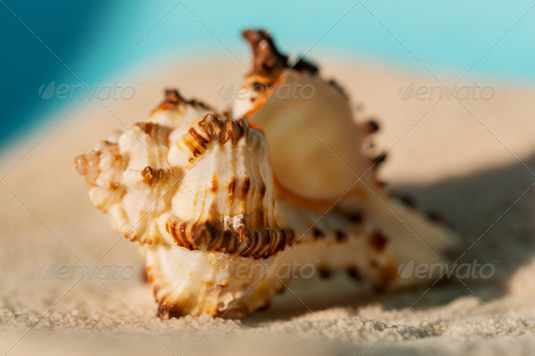Shell - Stock Photo - Images