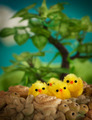 Easter chicks - PhotoDune Item for Sale
