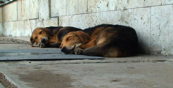 Two Dogs Sleeping Outdoors 02