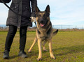 german shepherd and owner - PhotoDune Item for Sale