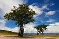 Solitary trees in dry environment - PhotoDune Item for Sale