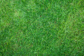 Close-up image of fresh spring green grass - PhotoDune Item for Sale