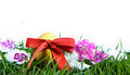 Easter eggs on green grass over white background - PhotoDune Item for Sale