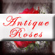 Antique Roses - GraphicRiver Item for Sale