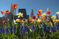 Sunlit colorful flower garden decorate a city in spring - PhotoDune Item for Sale