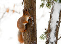 Squirrel on a tree - PhotoDune Item for Sale