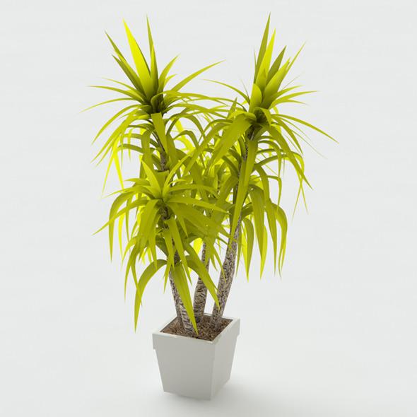 3D Model Potted Dracena Plant