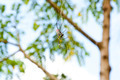 Spider - PhotoDune Item for Sale