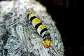 Yellow Earthworm - PhotoDune Item for Sale