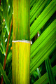 Tropical Background - PhotoDune Item for Sale