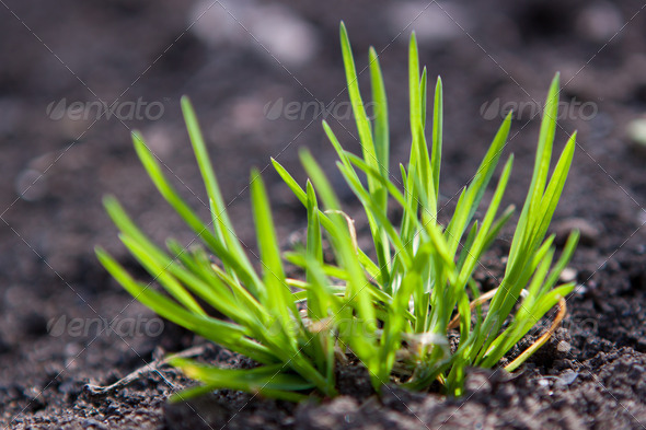 PhotoDune Green sprout in the ground 4285615
