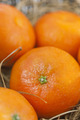 Mandarins - PhotoDune Item for Sale