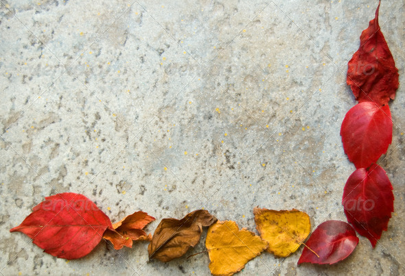 fall leaves frame on grey - Stock Photo - Images