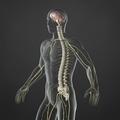 Nervous System - PhotoDune Item for Sale