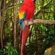 Macaw parrot - PhotoDune Item for Sale