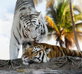 White And Brown Tigers - PhotoDune Item for Sale